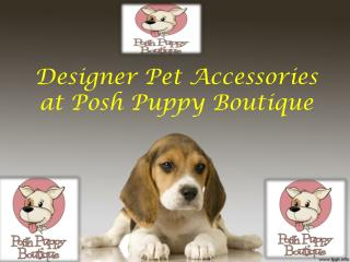 Designer Pet Accessories at Posh Puppy Boutique