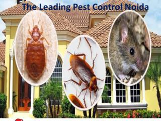 The Leading Pest Control Noida Call 9899176888