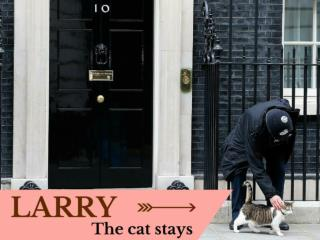 Larry the cat stays