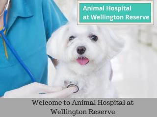 Animal Hospital And Pet Boarding Services In Wellington