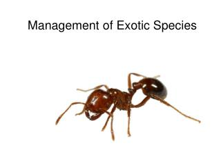 Management of Exotic Species