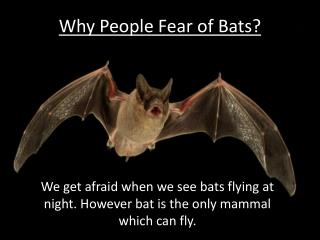 Why People Fear of Bats?