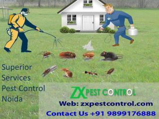 Superior Services Pest Control Noida Call at 9899176888