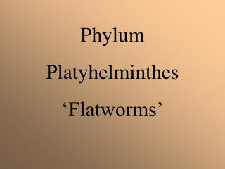flatworms essay