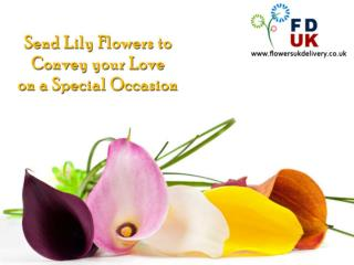 Send Lily Flowers to Convey your Love on a Special Occasion