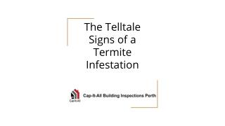 The Telltale Signs of a Termite Infestation