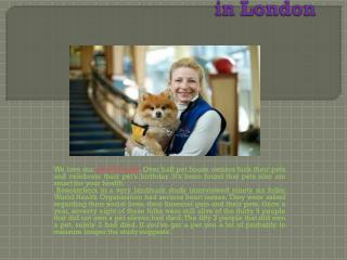 The Benefits of Pet Therapy in London