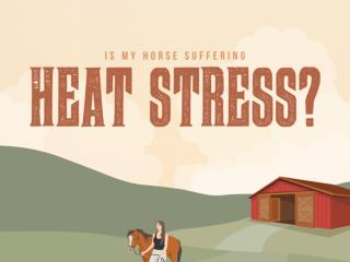 Is My Horse Suffering from Heat Stress?
