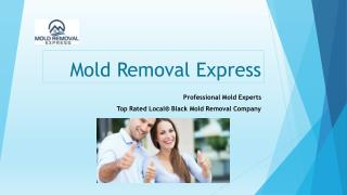 Detection and prevention of mold at affordable prices