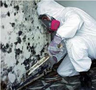 Mold Remediation Miami
