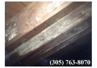 Mold Remediation Fort Lauderdale