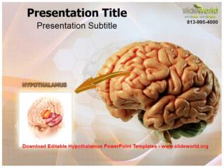 Download Editable Hypothalamus PowerPoint Templates