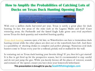 How to Amplify the Probabilities of Catching Lots of Ducks on Texas Duck Hunting Opening Day?