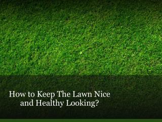 How to Keep The Lawn Nice and Healthy Looking?