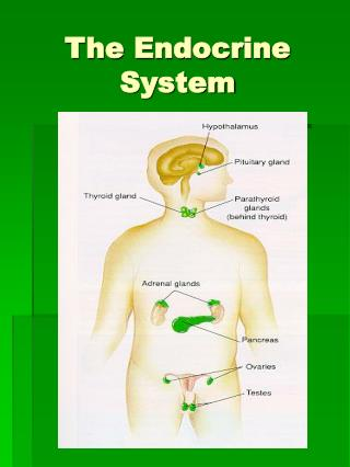 The Endocrine System