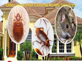 Odor Less Pest Control Noida Services Call at  91 9899176888