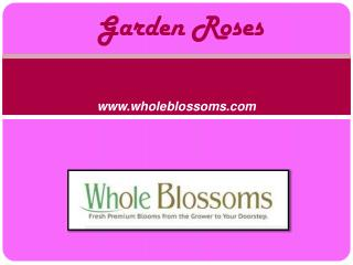 Wholesale Garden Roses - Wedding Flowers