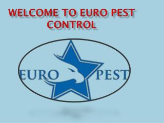 Best Pest Control Services in Essex, London