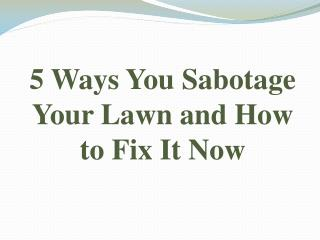 5 Ways You Sabotage Your Lawn and How to Fix It Now