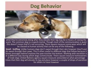 Dog Behavior: How Do Dogs Communicate?