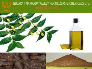 Dynamite Benefits of the Neem oil