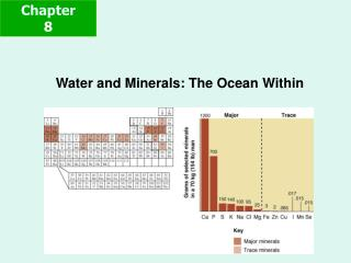 Water and Minerals: The Ocean Within