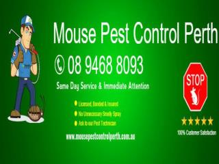 Mouse Pest Control Perth