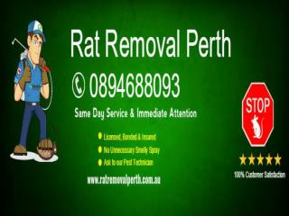 Rat Removal Perth