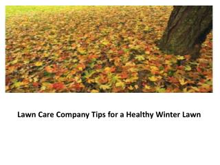 Lawn Care Company Tips for a Healthy Winter Lawn