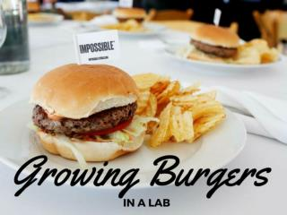Growing burgers in a lab