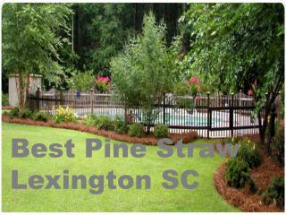 Best Pine Straw Lexington SC Within Low Cost