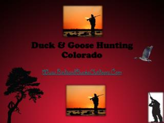 Colorado Guided Goose Hunt - Birds and Bucks Outdoors