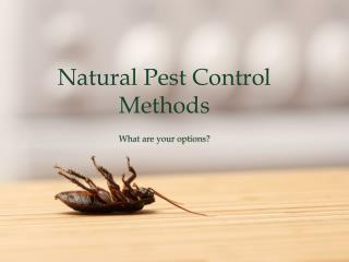 Effective & Natural Pest Control Methods