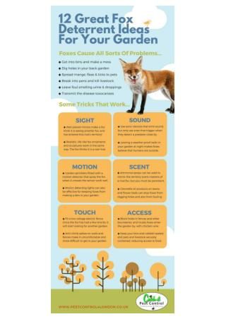 DETERRING FOXES FROM YOUR BACK YARD – SOME EXCELLENT IDEAS AND STRATEGIES THAT CERTAINLY WORK