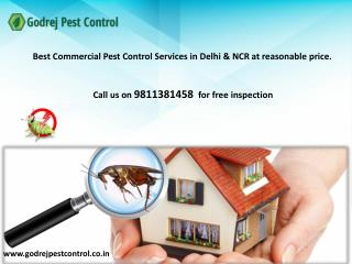 Get 10% discount on pest control and termite treatment in Noida-Contact Godrej Pest Control 9811381458