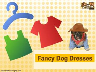 Dog Fancy Dresses and Outfits