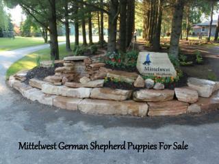 Julie Mittelwest German Shepherd Puppies For Sale