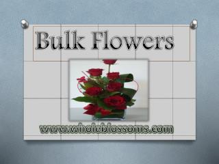 Bulk Flowers - www.wholeblossoms.com