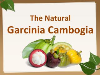 The Natural Garcinia Cambogia for weight loss