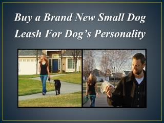 Buy a Brand New Small Dog Leash For Dog's Personality