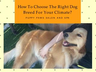 Choose The Right Dog Breed For Your Climate