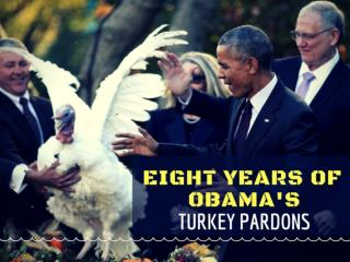 Eight years of Obama's turkey pardons