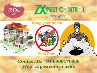 Affordable Cost Pest Control Noida Call 9899176888