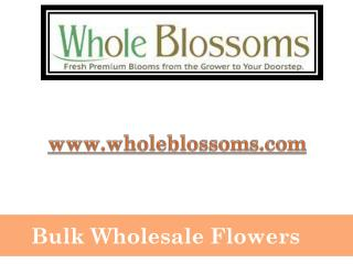 Bulk Wholesale Flowers - www.wholeblossoms.com