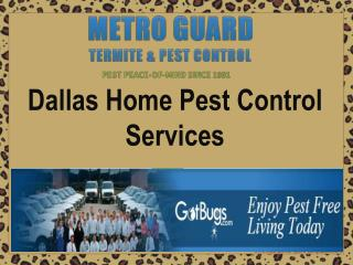 Dallas Home Pest Control Services