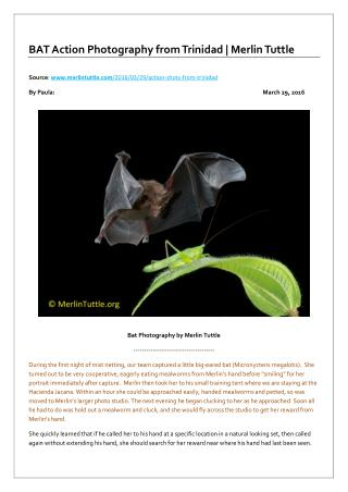 BAT Action Photography from Trinidad