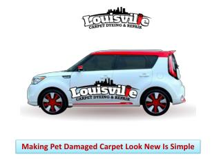 Making Pet Damaged Carpet Look New Is Simple