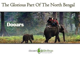 Experience Wildlife Adventure At Dooars