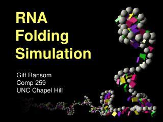 RNA Folding Simulation
