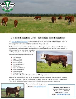 Get Polled Hereford Cows - Fabb Herd Polled Herefords